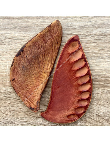 Xylia pods for aquarium - front and back.