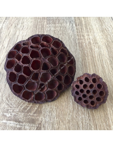 Lotus pods for aquarium - Size M and XL