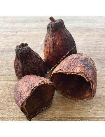 Cacao pods for aquarium - Marc Del