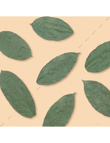 Small Guava leaves for aquarium