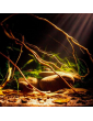 Aquarium Blackwater